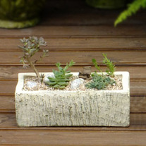 Rectangular Succulent Ceramic Pot- Small