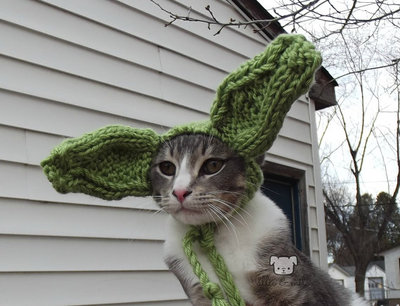 Star Wars Yoda Cat Hat