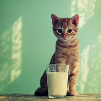 Kitteh_20haz_20milk_medium