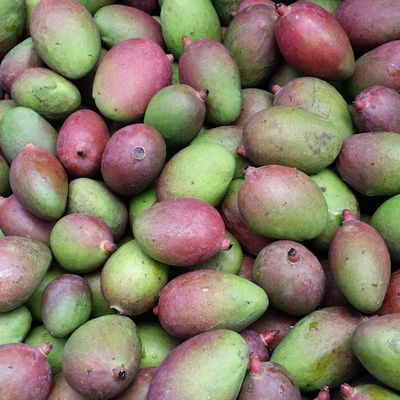 Fresh green mangoes ($6.99 lbs)