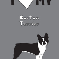 Boston Terrier, 5x7 print