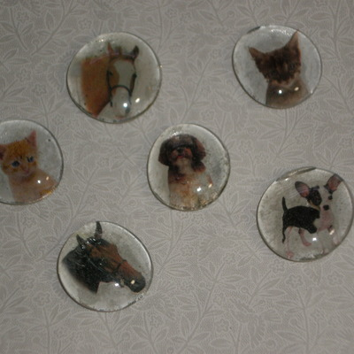 Magnet set - kittens, puppies, & horses
