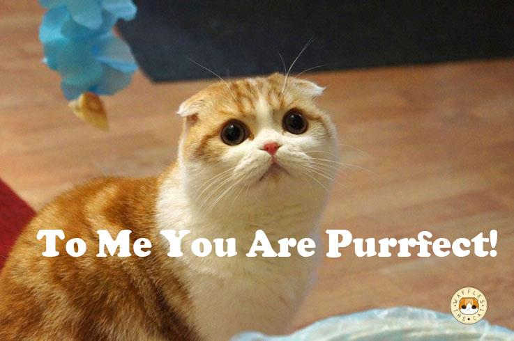 Purrfect dating site for cats