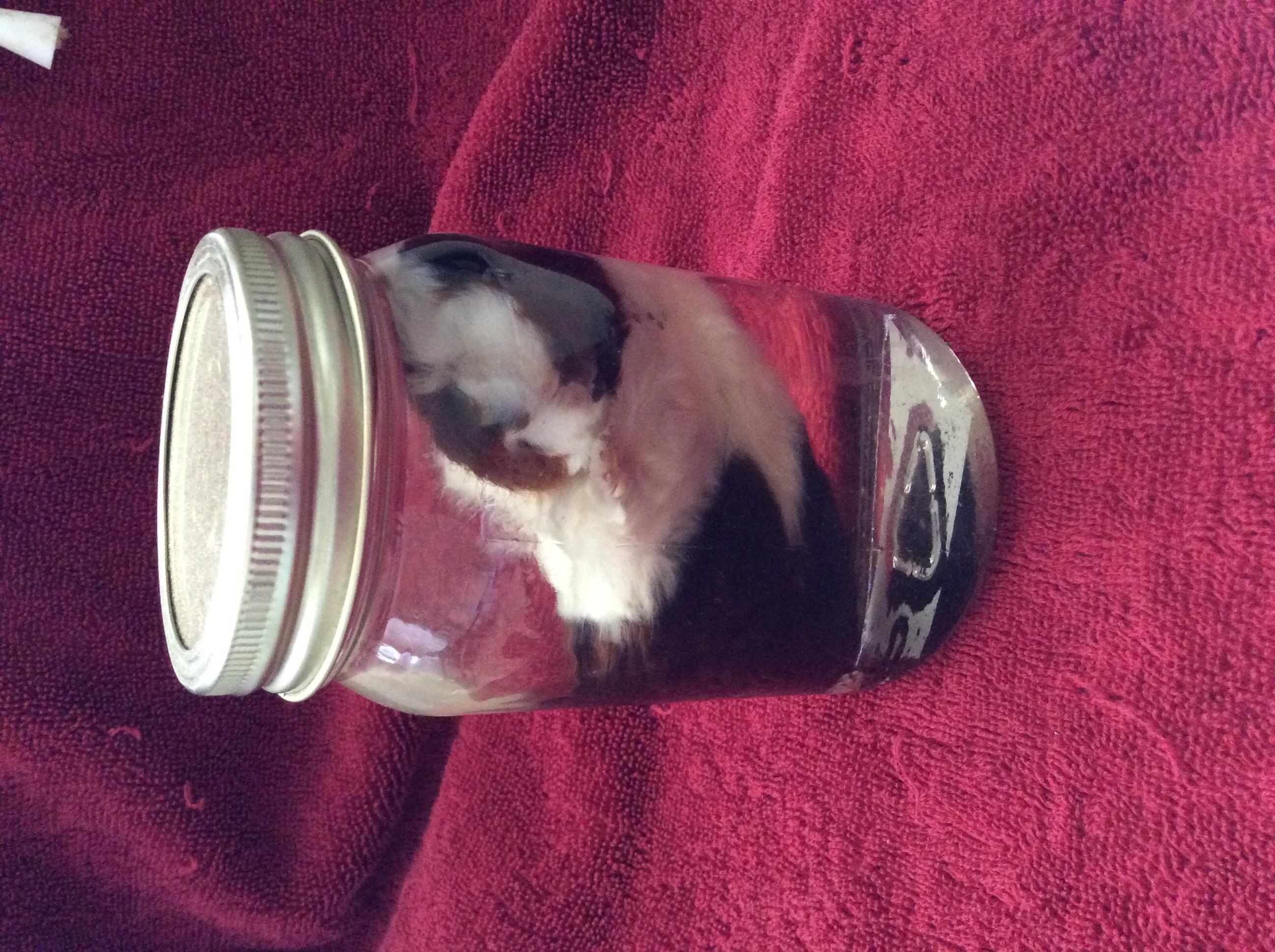 Fetal Guinea Pig Wet Specimen On Storenvy
