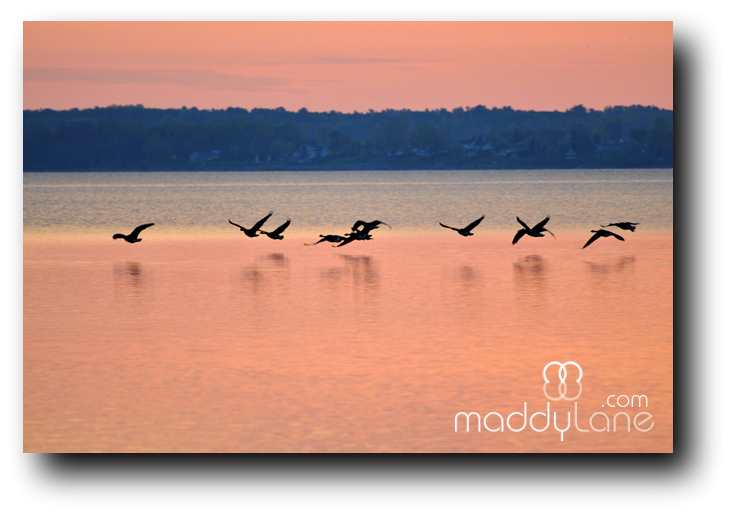 M2436 Dreams can come true ~ Photo on wood panel frame by Maddylane