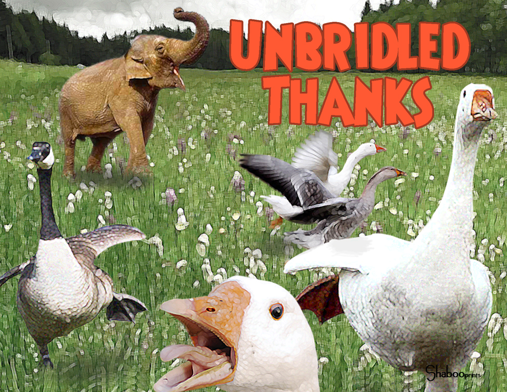 Funny Animals Blank Thank You Greeting Card Unbridled